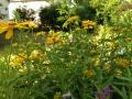 Sonnenblumen - Ferienhaus Steffen in Teterow-compressed.jpg